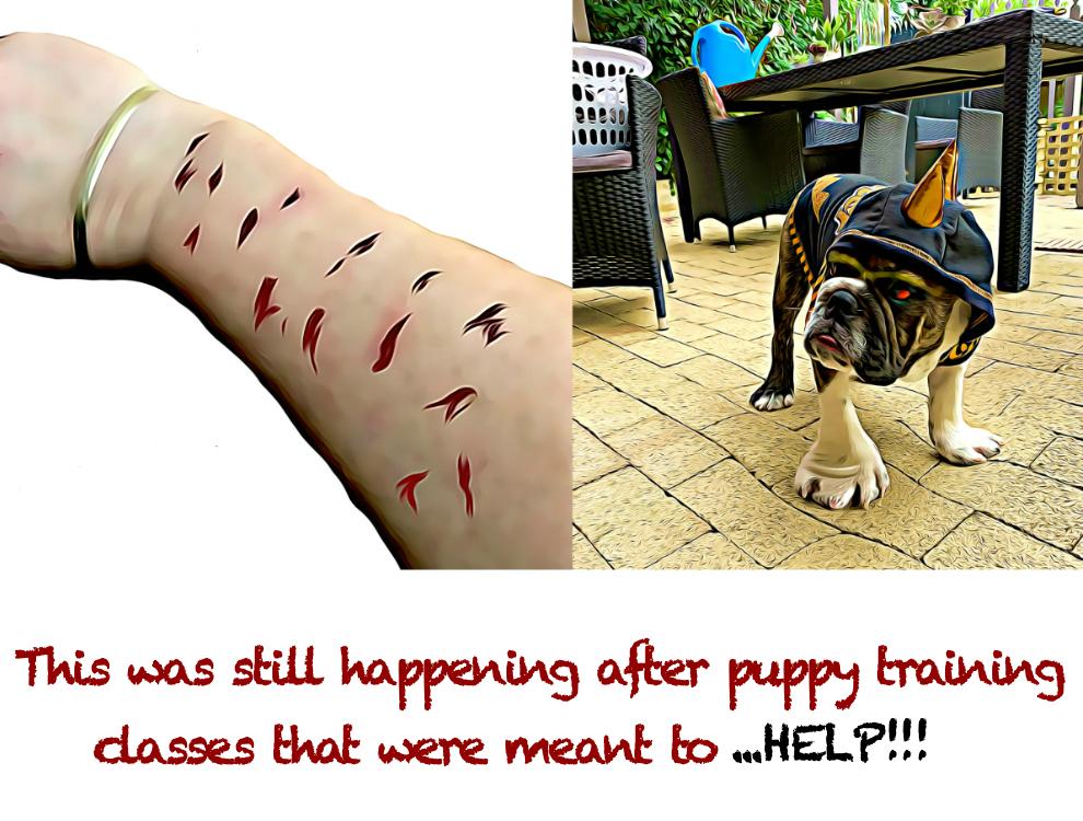 Puppy Training For Better Behavior